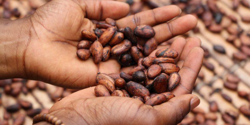 La sélection des meilleurs candidats imagée par la sélection des meilleurs grains de café. Repérer le bon candidat exige méthodes et rigueur.